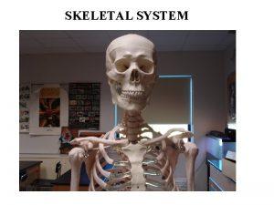 SKELETAL SYSTEM Functions of the Skeletal System Bones