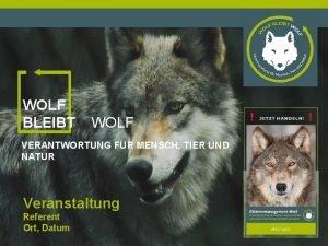 WOLF BLEIBT WOLF VERANTWORTUNG FR MENSCH TIER UND