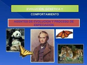 EVOLUCIN GENTICA Y COMPORTAMIENTO FACTORES DE EVOLUCIN La