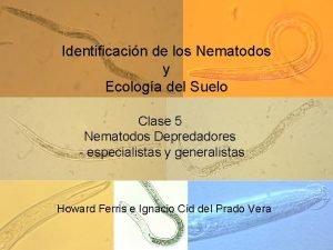 Identificacin de los Nematodos y Ecologa del Suelo
