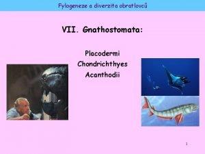Fylogeneze a diverzita obratlovc VII Gnathostomata Placodermi Chondrichthyes