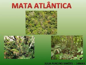 MATA ATL NTICA JULIA PURCINO SIMES 14 MA