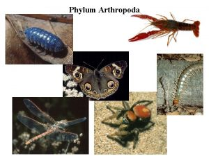 Phylum Arthropoda Phylum Arthropoda Several million species Hard