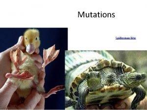 Mutations Spiderman bite Mutation A mutation is a