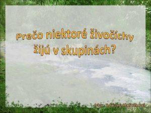 Mgr Adriana Hotkov Spoloenstvo prrodn umel ivone spoloenstv