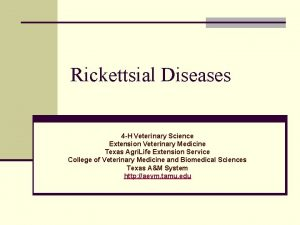Rickettsial Diseases 4 H Veterinary Science Extension Veterinary