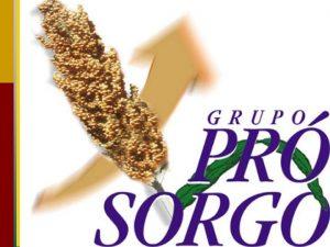 SORGO NO BRASIL PASSADO PRESENTE E FUTURO Grupo