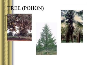 TREE POHON Defenisi l Secara sederhana Tree Pohon