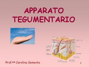 APPARATO TEGUMENTARIO Prof ssa Carolina Sementa 1 2