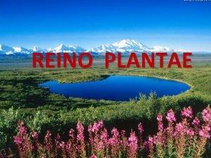 REINO PLANTAE Evoluo Prof Gilmar Marques 2 Caractersticas