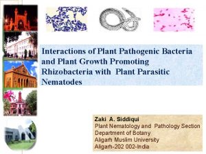 Interactions of Plant Pathogenic Bacteria and Plant Growth