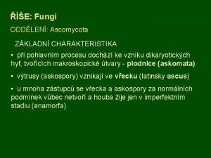 E Fungi ODDLEN Ascomycota ZKLADN CHARAKTERISTIKA pi pohlavnm