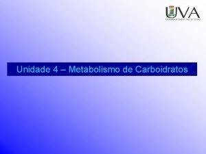 Unidade 4 Metabolismo de Carboidratos Introduo Carboidratos C