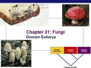 Chapter 31 Fungi Domain Eukarya Domain Eubacteria AP