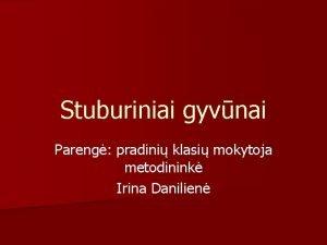 Stuburiniai gyvnai Pareng pradini klasi mokytoja metodinink Irina