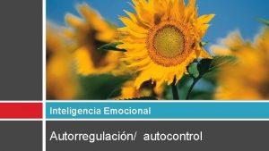 Inteligencia Emocional Autorregulacin autocontrol Autorregulacin Autocontrol Control de