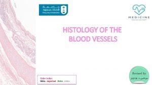 HISTOLOGY OF THE BLOOD VESSELS Color index Slides