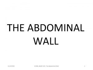 THE ABDOMINAL WALL 1142020 SCNM ANAT 604 The