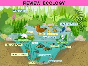REVIEW ECOLOGY Identify an abiotic factor sunlight water