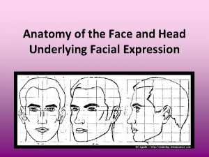 Anatomy of the Face and Head Underlying Facial