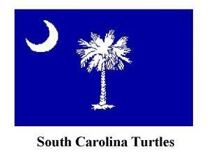 South Carolina Turtles South Carolina Turtle Species Emydidae