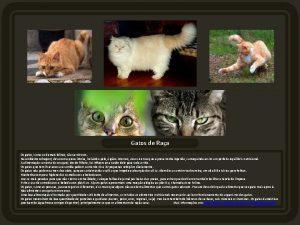 Gatos de Raa Os gatos como os demais
