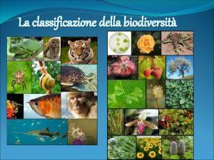 La classificazione della biodiversit Cos la biodiversit La