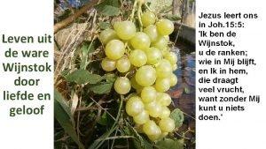 Leven uit de ware Wijnstok door liefde en