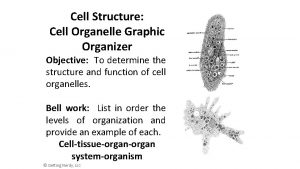 Cell Structure Cell Organelle Graphic Organizer Objective To
