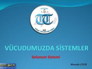 VCUDUMUZDA SSTEMLER Solunum Sistemi Mustafa ELK Solunum sisteminde