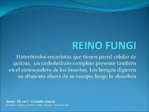 REINO FUNGI Hetertrofos eucariotas que tienen pared celular