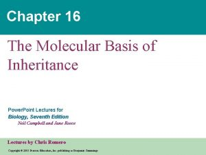 Chapter 16 The Molecular Basis of Inheritance Power