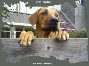 Over honden en over mensen Als honden niet