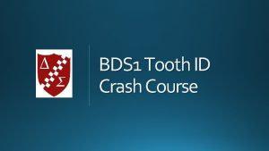 BDS 1 Tooth ID Crash Course https www