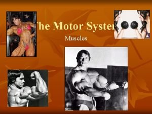 The Motor System Muscles Muscles n Howstuffworks Cardiac