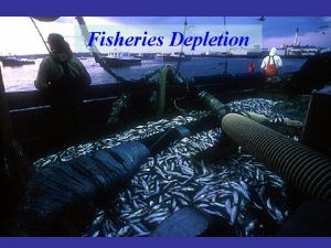 Fisheries Depletion Examples of fisheries in decline Northern