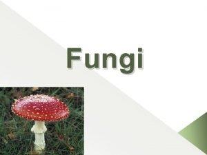 Fungi Outline Definition of fungi Structure of fungi
