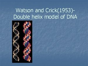 Watson and Crick1953Double helix model of DNA Double