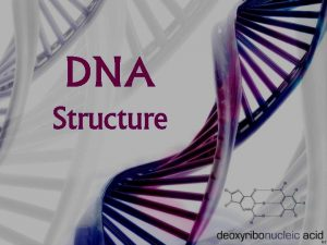 DNA Structure DNA Structure DNA consists of two