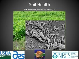 Soil Health Rick Haney Ph D USDAARS Temple