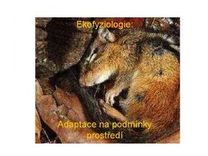 Ekofyziologie Adaptace na podmnky prosted Podmnky abiotick faktory