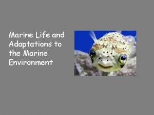 Marine Life and Adaptations to the Marine Environment