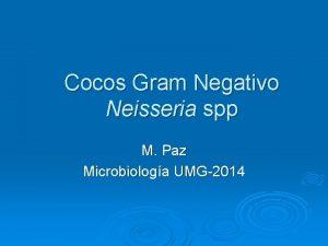 Cocos Gram Negativo Neisseria spp M Paz Microbiologa