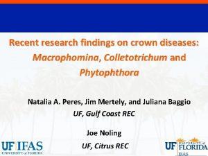 Recent research findings on crown diseases Macrophomina Colletotrichum
