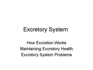 Excretory System How Excretion Works Maintaining Excretory Health