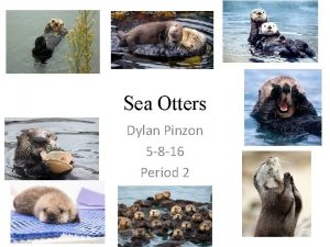 Sea Otters Dylan Pinzon 5 8 16 Period