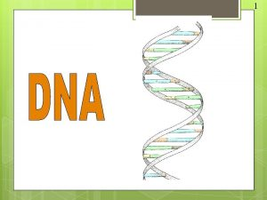 1 DNA stands for deoxyribose nucleic acid This
