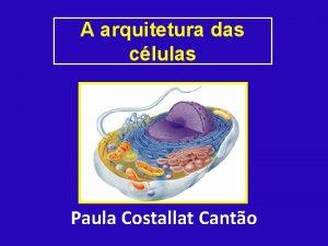 A arquitetura das clulas Paula Costallat Canto Clulas