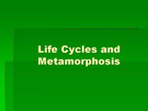 Life Cycles and Metamorphosis Life Cycles and Metamorphosis