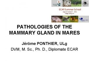 PATHOLOGIES OF THE MAMMARY GLAND IN MARES Jrme